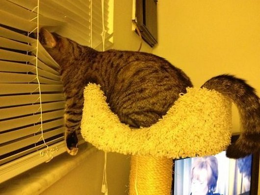 hilarious-funny-not-so-graceful-cats7